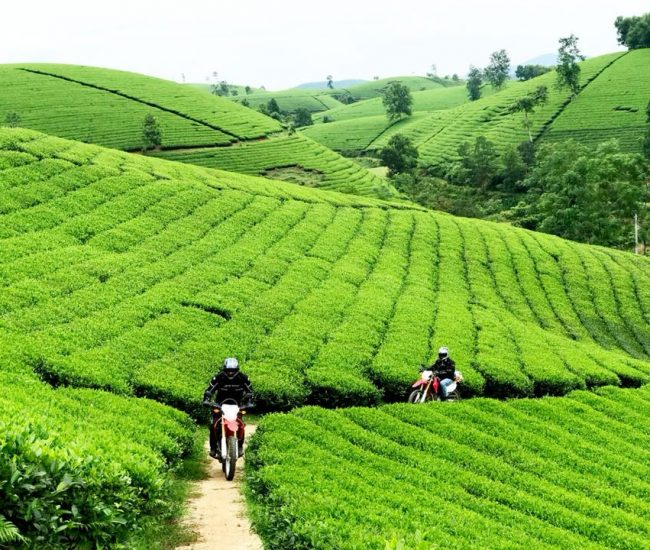 Ho Chi Minh Trail Motorcycle Tour: 8 Days to Conquer