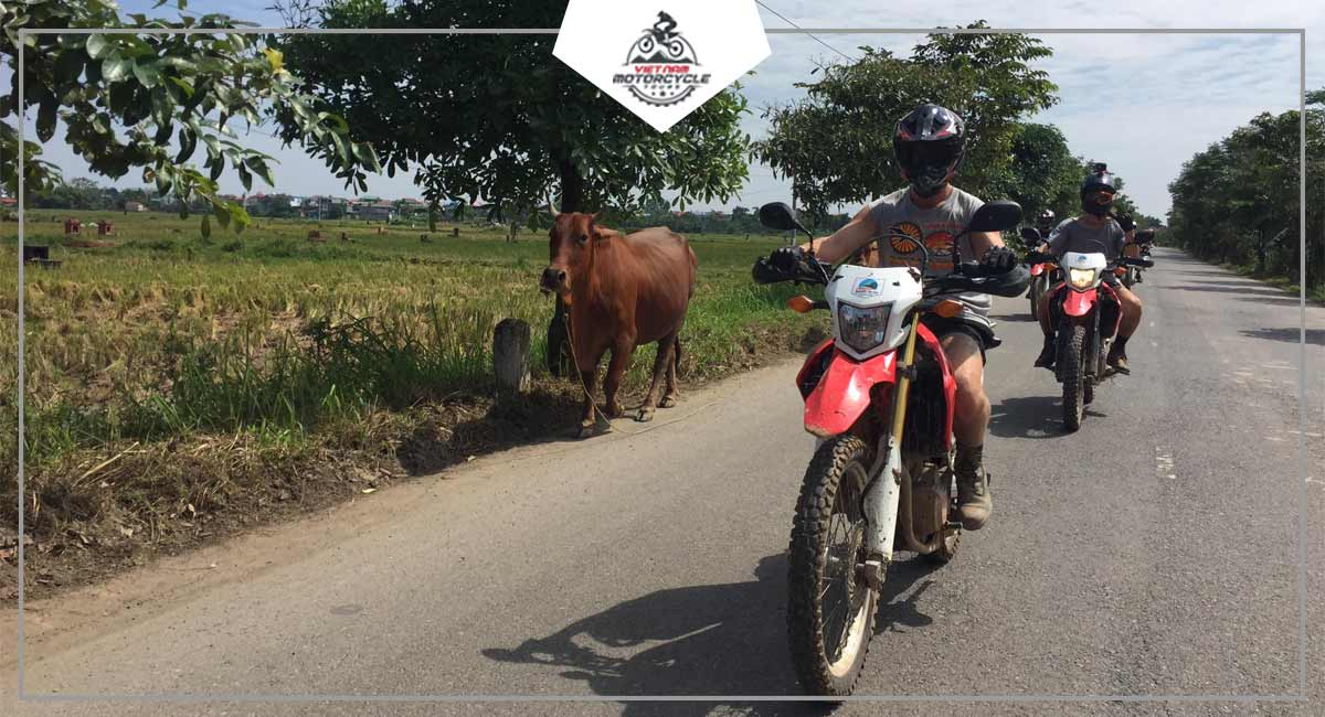 Advantages of Duong Lam ancient village motorcycle tour